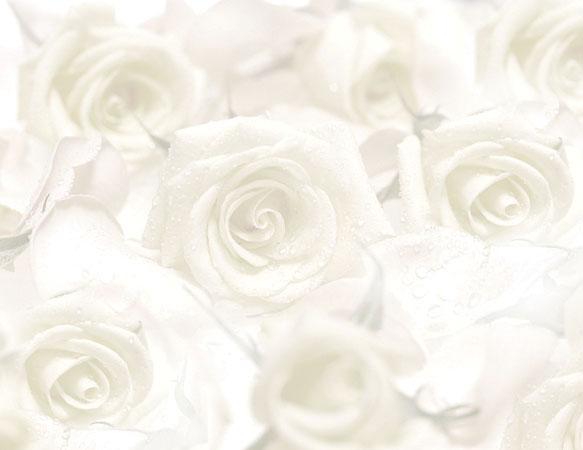Rose Design Wedding Program Inserts Pkg 100