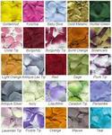 Rose Petal Color Samples - Request up to 12 for FREE!