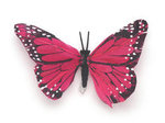 4.5 Hot Pink Feather Butterfly