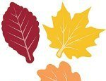 Fall Leaves Value Pack - Pkg 30