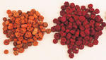Red or Orange Natural Dried Putka Pods - Great for Decorating!