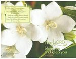 Heirs of Life Blank Wedding Programs - Pkg 100