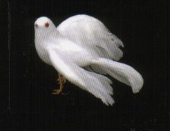 5 White Feather Flying Dove